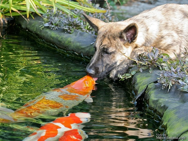 animales besandose