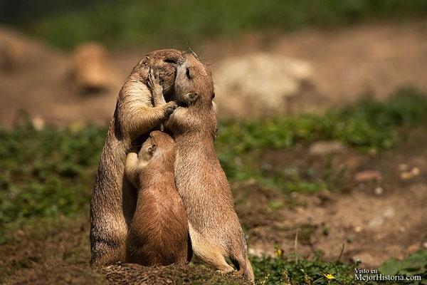 besos de animales