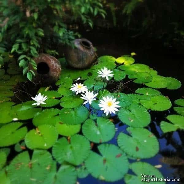 plantas bali