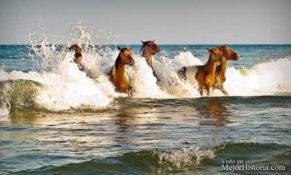 caballos mojados