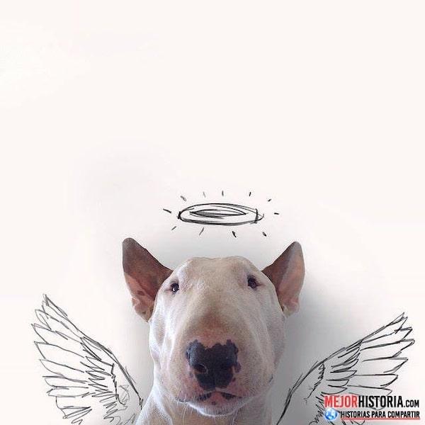 perro angel