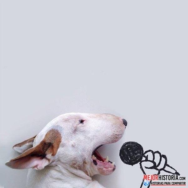 perro cantando
