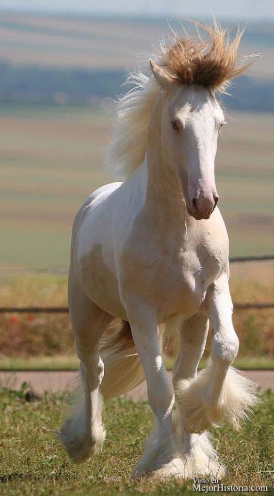 caballos locos