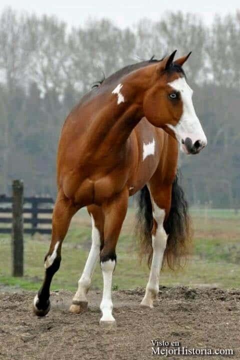 fotografias caballos