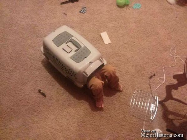 niños imitando animales
