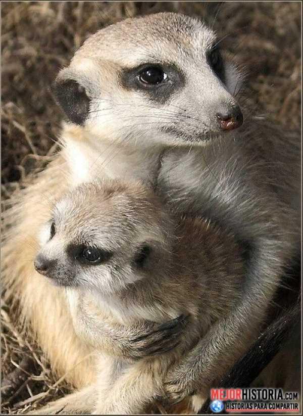 madre e hijo animales