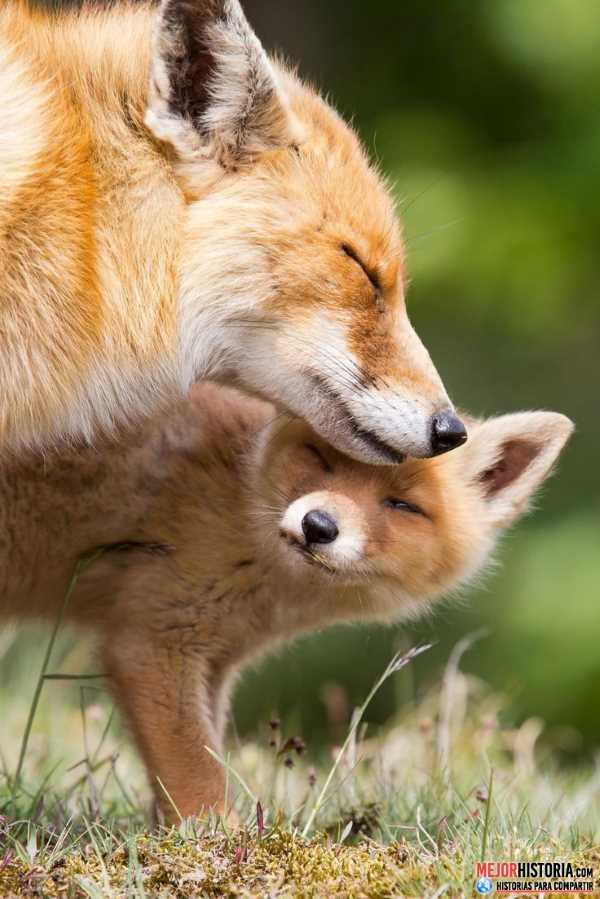 parejas de animales